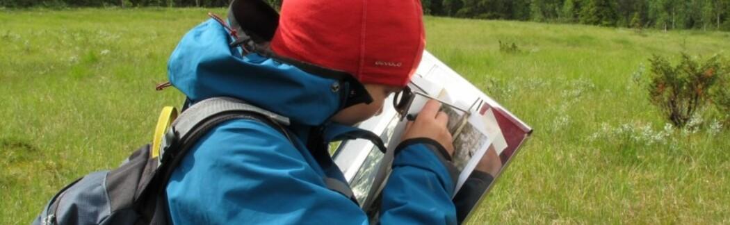 En verden av naturtyper - Heidrun A. Ulleruds blogg