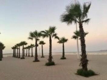 Den hvite sandstranden ved Kardemommebyen Essaouira. (Foto: Privat)