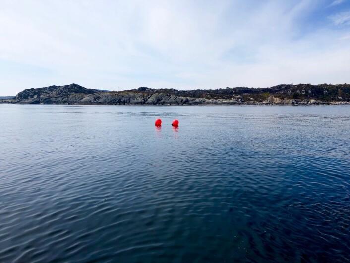 Under desse blåsene befinn det seg eit bur med 30 fisk. Fisken står der for å samle lakselus. Foto: Lars Asplin, Havforskningsinstituttet
