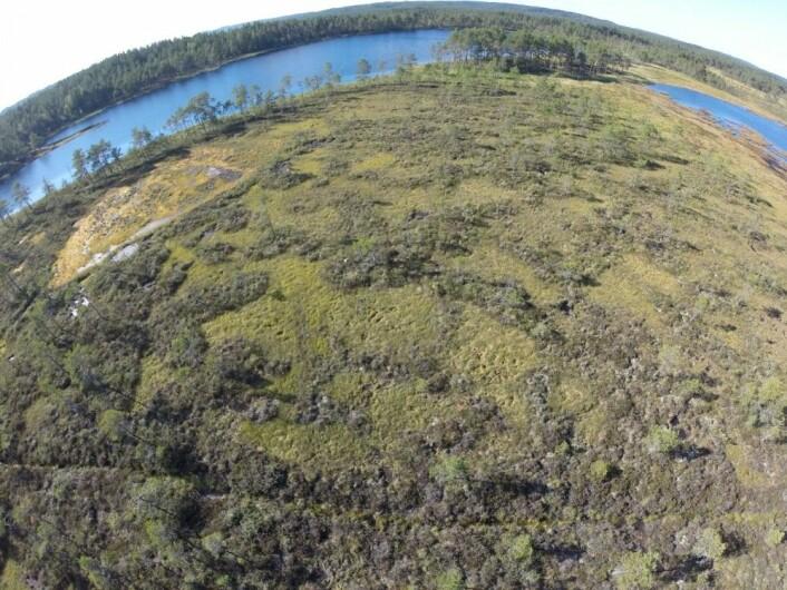 Myr sett fra drone. Her skal myra restaureres, men først undersøker vi den både på bakken og fra lufta. (Foto: NINA)