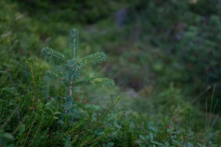 (Foto: Honorata Gajda, Botanisk forening)