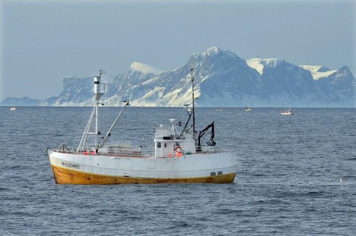 (Foto: Gunnar Sætra, Havforskningsinstituttet)