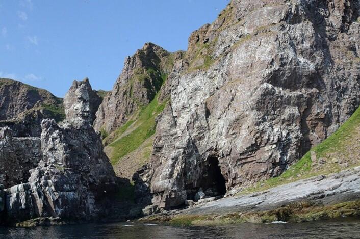For 40 år siden var fuglefjellet ved Syltefjord i Øst-Finnmark en av de største i Europa. Nå er den nesten helt taus. (Foto: Rob Barrett.)
