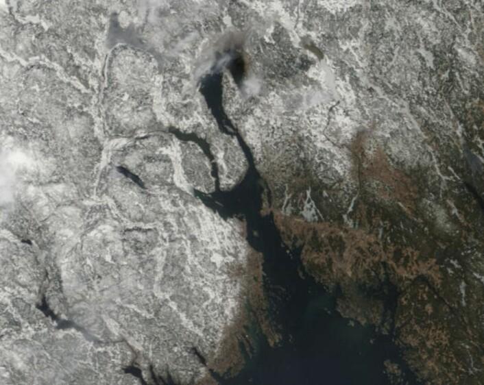 Våren er på vei sørfra - helt sikkert! (Bilde: NASA Terra MODIS)