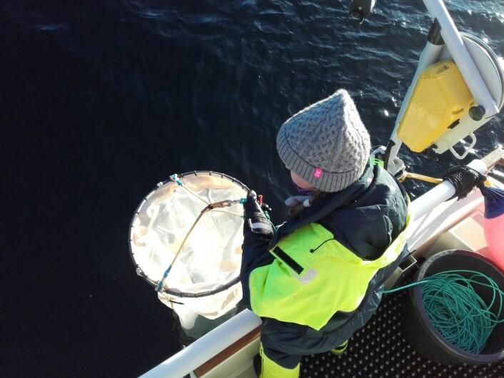 Klargjøring av planktonhåven (Foto: Terje van der Meeren)