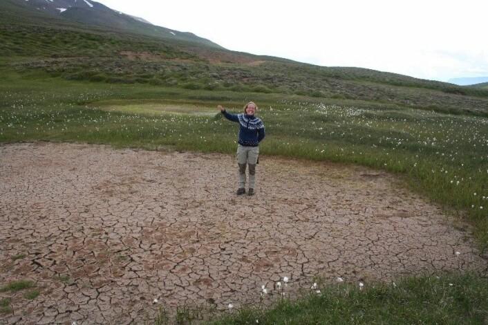 Det går an å bli hoppende glad over å finne jøkelstarr på Island. (Foto: Kristine Bakke Westergaard)