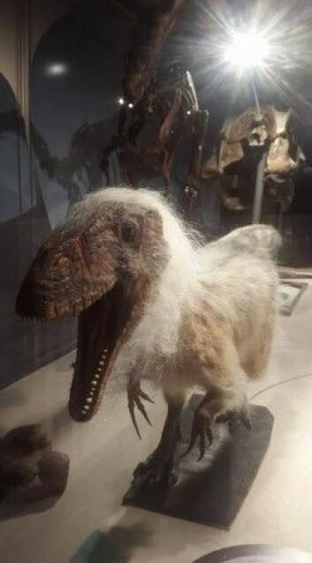 En anbefaling til slutt: Se den nye evolusjonsutstillingen på Naturhistorisk Museum. Bare gjør det. Foto: LLD
