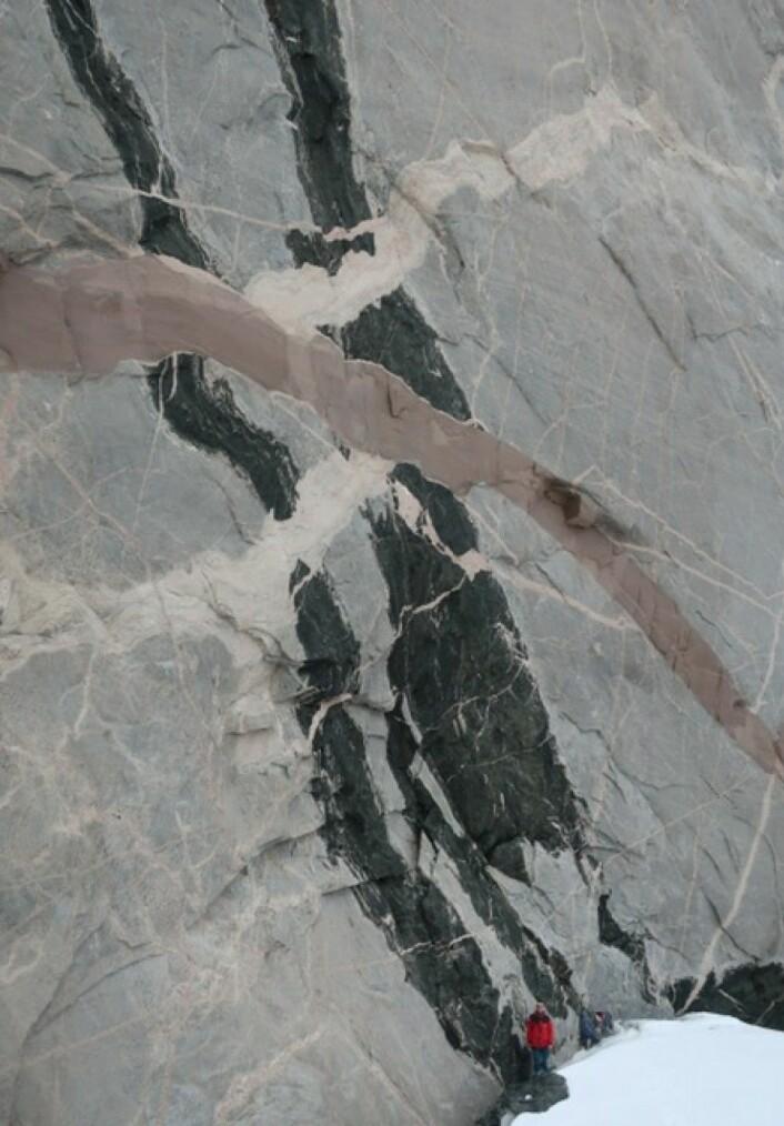 Spektakulær geologiske relasjoner hvor smelte har størknet etter å ha strømmet gjennom sprekker i fjellet. Ganger av smeltebergarter som krysser hverandre viser at gneisen først ble infiltrert av en mørk smelte, deretter av lys pegmatitt og til slutt en rød granitt. Personen nederst i bildet viser dimensjonen på fjellsiden . (Foto: Ane K. Engvik)