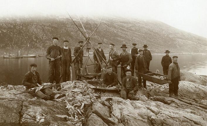 Tidlig 1900-tallet: Fiskere sløyer og veier fisken i fjæra i Torsvåg. (Foto: Tromsø Museum)
