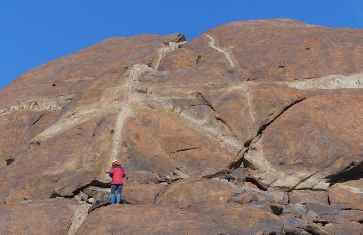Geologen i bergveggen. (Foto: Ane K. Engvik)