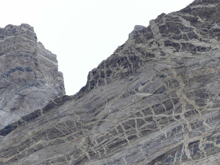 Smelter har trengt seg fram gjennom berget: De lyse stripene er granittiske ganger som kutter den båndede gneisen. (Foto: Ane K. Engvik)