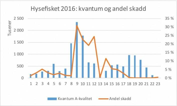Hysefisket første halvår 2016, uke for uke. Kvantum landet hyse og andel skadd hyse. Kilde: Norges Råfisklag. (Illustrasjon: Nofima)