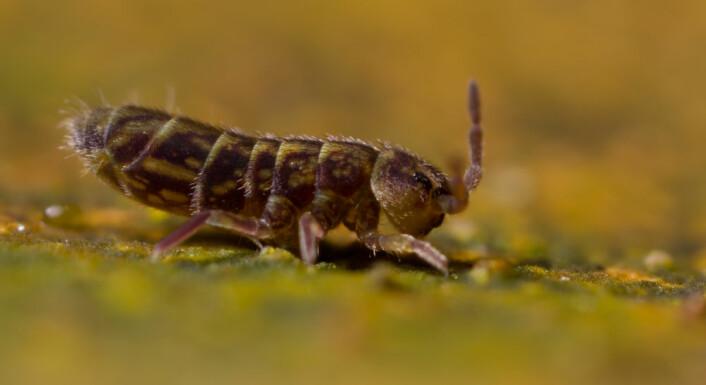 Naturens vaktmester til tjeneste! (Foto: Shutterstock /NTB scanpix)