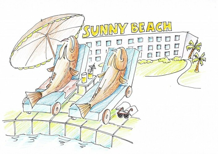 På hotellet slapper torsken av etter fangst og får melkesyra ut av kroppen. (Illustrasjon: Oddvar Dahl © Nofima)
