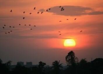 Gambia kan tilby varme, sol og «et mørke fullt av lyder, lukt og levd liv». (Foto: Colourbox)