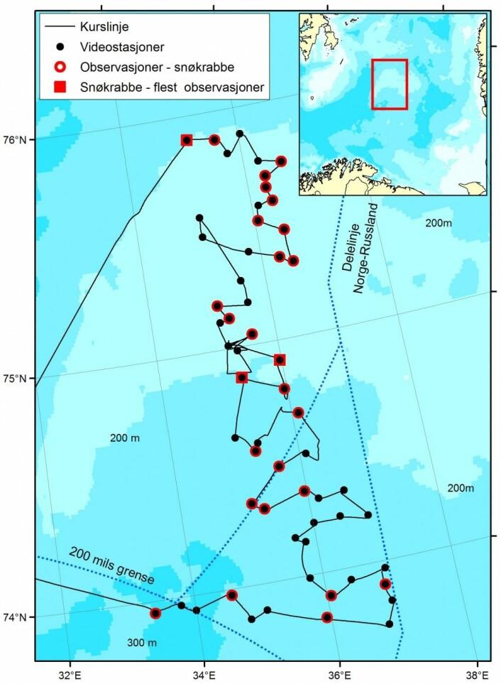 Kartet viser stasjonene i det nordøstlige Barentshavet hvor snøkrabbe er blitt observert (rød markering). På de tre stasjonene med størst tetthet av krabber (markert med rød firkant) er tettheten 4000 - 9000 individer per km2. Dette er et minimums estimat siden de fleste er små (< 5 cm over ryggskjoldet) og har samme farge som mudderbunnen de lever på og derfor kan være vanskelige å observere. (Kart: Mareano)