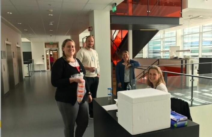Medlemmer av epigenetikk-gruppen ved avdeling for Molekylæronkologi, Institutt for Kreftforskning, Oslo Universitetssykehus samler inn urinprøver fra friske kontroller. Fra venstre: Hilde Honne, Kim Andresen, Guro E. Lind, Heidi D. Pharo.Foto: Privat