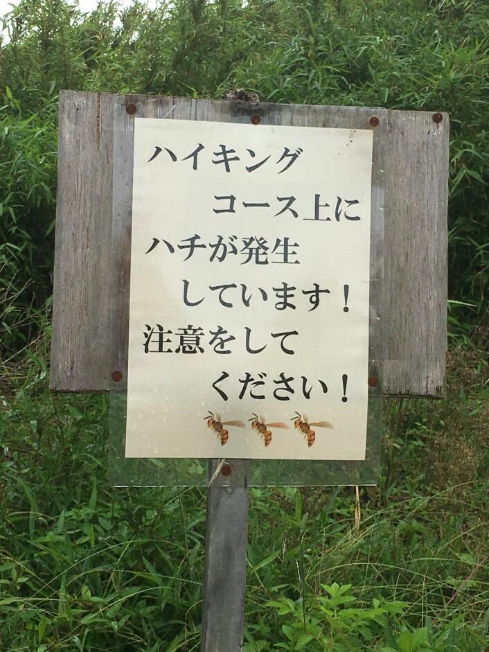På fottur i Japan i sommer dukket dette skiltet opp. Det står noe sånt som at «Kjempeveps observert, vær oppmerksom». Selvsagt ble jeg nysgjerrig… Foto: Anne Sverdrup-Thygeson