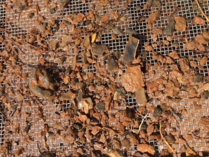 Typisk arbeidssituasjon. Jordmassene spyles i et sold og flinten kommer til syne. (Foto: Arkeologisk museum, UiS)