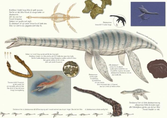 Svaneøgler er ålreite dyr. Faksimile fra barneboka Monsterøglene på Svalbard Ill.: Esther van Hulsen