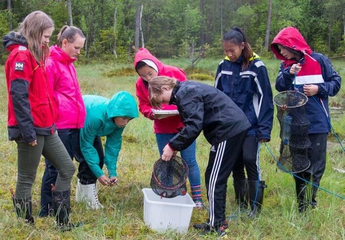 Elvene samarbeider i grupper med samle inn rusene og bestemme og telle dyrene. (Foto: Børre K. Dervo ©)