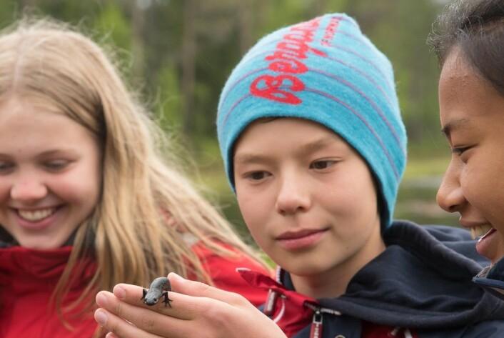 Elever i 7. klasse ved Røyslien skole på Lillehammer ble med ut på tur for å telle salamander. (Foto: Børre K. Dervo ©)
