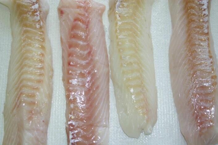 Hvilken torskefilet får du mest lyst på? Er fisken stresset under fangst, eller dårlig utblødd, blir fileten rosa, i stedet for hvit. (Foto: Sjurdur Joensen © Nofima)