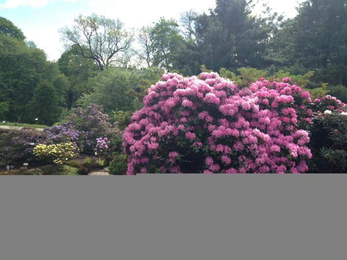 Blomsterprakt i Botanisk Hage i Oslo, sterkt endret natur, men fin likevel. Foto: HAU