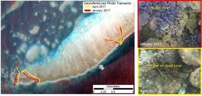 Satellittbilder av korallrev sammenliknet med posisjonsbestemte bilder av korall fra de samme stedene. C. Roelfsema, University of Queensland