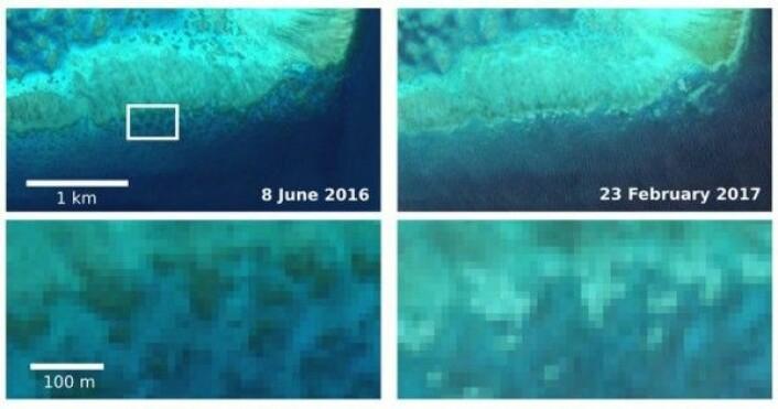 Koraller i Barriererevet som blekner, sett av miljøsatellitten Sentinel-2A. Copernicus/Sentinel/J. Hedley/C. Roelfsema