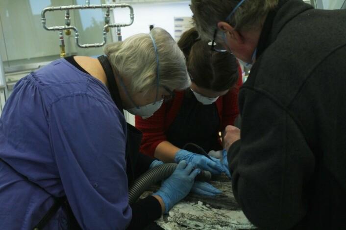 Virgin ligger på operasjonsbordet og blir sandblåst. Foto: SMRG