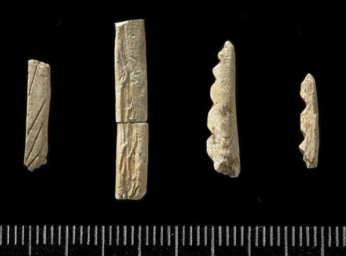 Skaftfragmenter av fiskekroker fra Prestemoen 1 Skien. Boplassen er datert til cirka 7500 f.Kr. (Foto: Kirsten J. Helgeland/KHM)