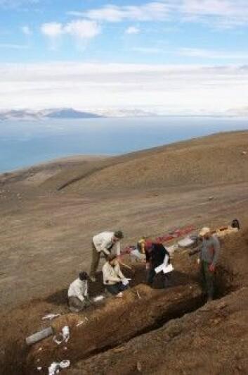 Utsikt over Slottsmøya og utgravingen av fiskeøgla Gamla. (Foto: Jørn Hurum)