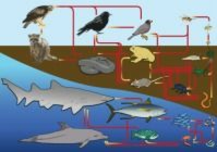 """""""Food web diagram"""" by LadyofHats - Own work. Licensed under CC0 via Wikimedia Commons"""