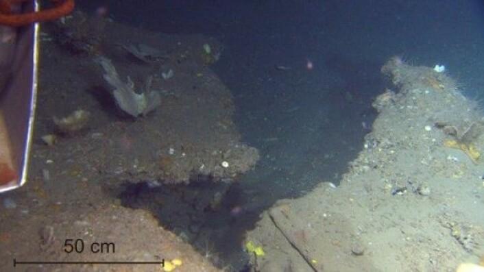 Karbonatskorpe på den nordøstre enden av linjen. Foten på videoriggen i øvre venstre hjørne. (Foto: MAREANO)