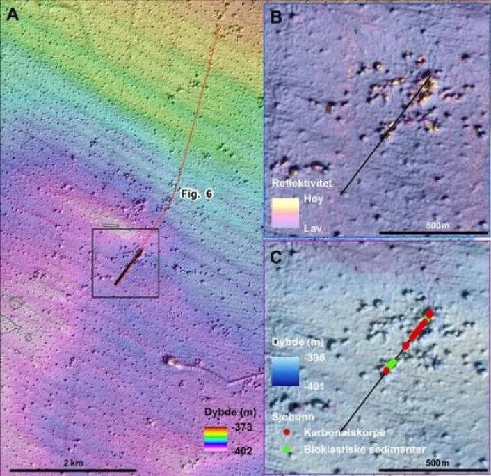 A: Videolinja (svart linje) hvor mange blokker av karbonatskorpe ble observert.B: I pockmarkområdet er det generelt lav backscatter, unntatt i noen større pockmark hvor verdiene er mye høyere.C: Bunnrelieffkart med markering av karbonatskorpe (røde punkter). Grønne punkter viser bioklastiske sedimenter (hovedsaklig korallgrus)(Foto: MAREANO)