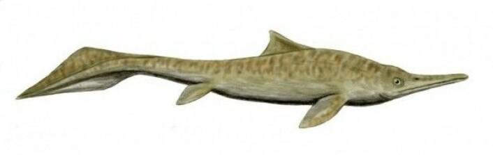Mixosaurus fra trias, blant annet funnet på Svalbard. (Tegning: Nobu Tomura)