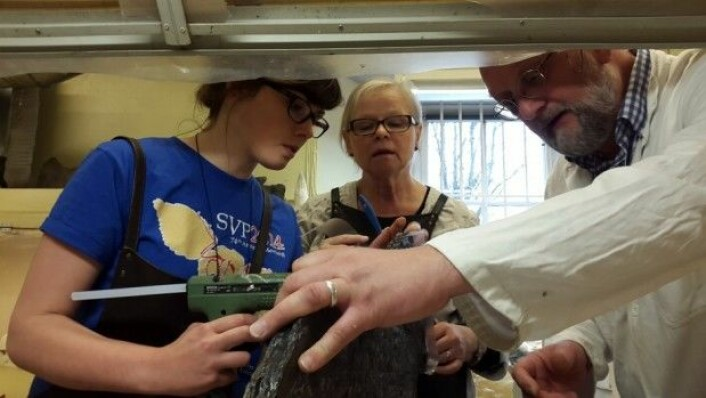 Mine kolleger Aubrey og May-Liss i dyp konsentrasjon med limpistol, fossil og kursholder Frank Osbæck. (Foto: LLD)