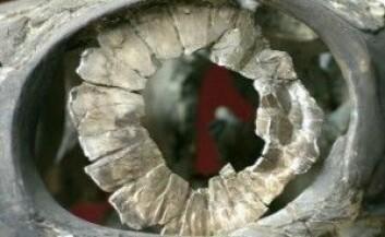 Et Ophthalmosaurus-øye satt inni denne store ringen med beinplater. (Foto: Natural History Museum UK)