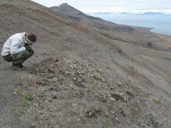 Fossil metanoppkomme fra jura på Svalbard. (Foto: Hans Arne Nakrem)