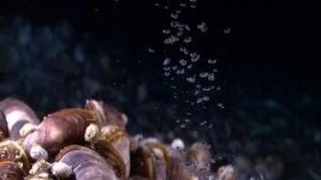 Moderne metanoppkomme. (Foto: Marine Conservation Institute)