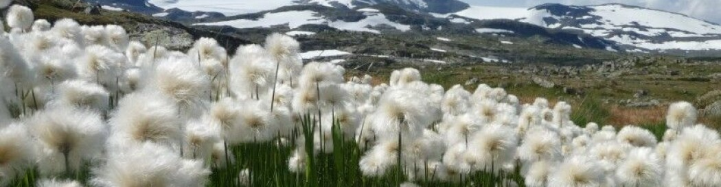 Plantepressa- en blogg fra botanikere ved Norsk institutt for naturforskning