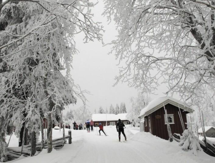 På vei til nystekte vafler, skolebrød og kanelboller på Sinober i Lillomarka. (Foto: Paul Kleiven, NTB scanpix)