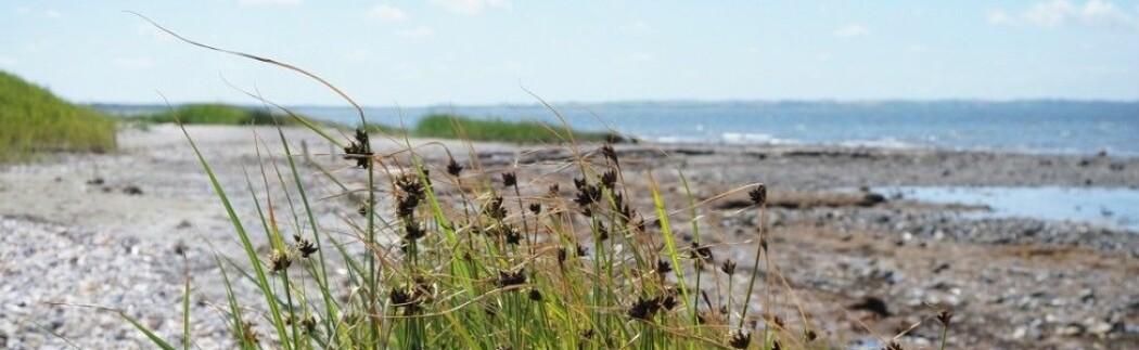 Viten om naturen - en blogg fra økologene på NTNU Vitenskapsmuseet
