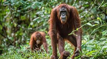 Kommentar: Hva kan redde regnskogen?