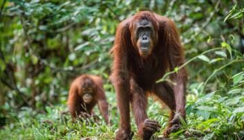 Hva kan redde regnskogen?