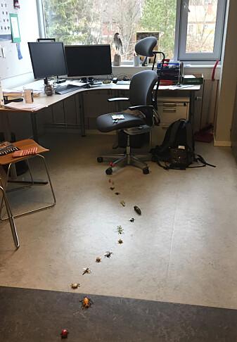 Velkommen på jobb: En sti av insekter. (Foto : Tone Birkemoe)