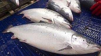Forskningsjournalistikk-pris for artikler om sjømatnæringen