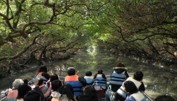 Naturvernområder over hele verden trues av ødeleggelse