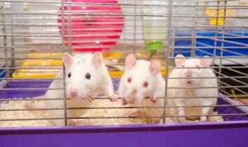 Etikk 24/7: De største forskningsskandalene i 2015, hodetransplantasjon og manglende rotter